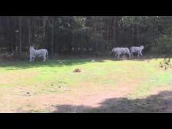 Serengeti Park – Almanya