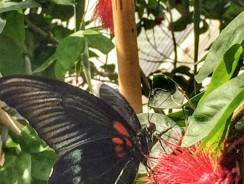 Konya Tropikal Kelebek Bahçesi vs İstanbul Kelebek Çiftliği